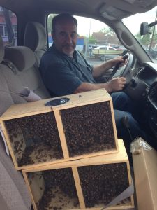 Bees In Truck, Pleasant Ridge B&B, La Conner