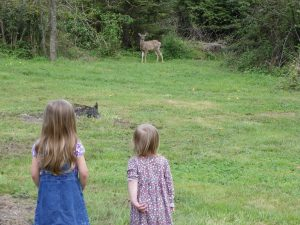 Deer with Grand-Children, Pleasant Ridge B&B, La Conner