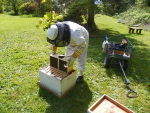 Installing Package Bees, Pleasant Ridge B&B. La Conner